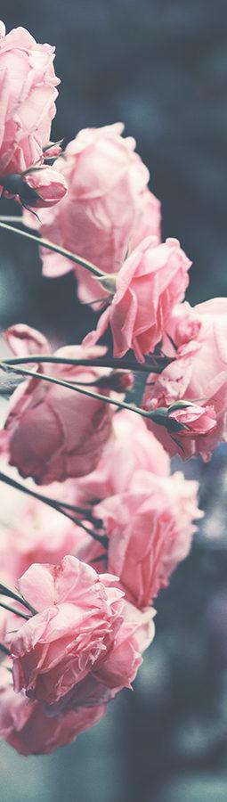 Rosas-Confe21Abril